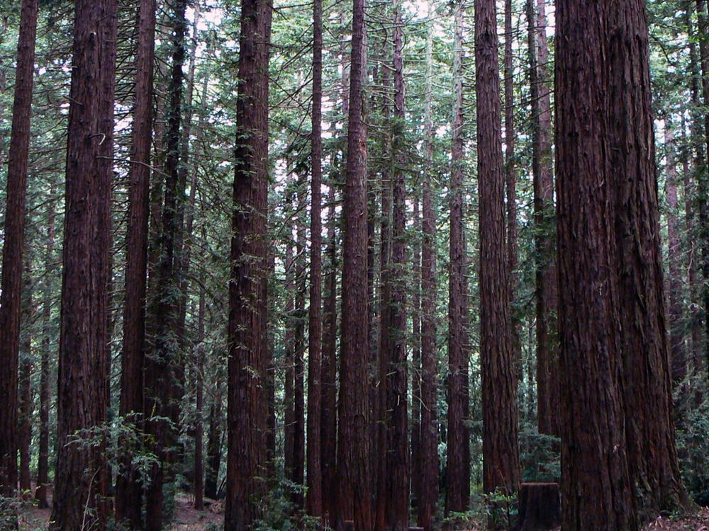 View from Big Trees Trail - Joaquin Miller Park