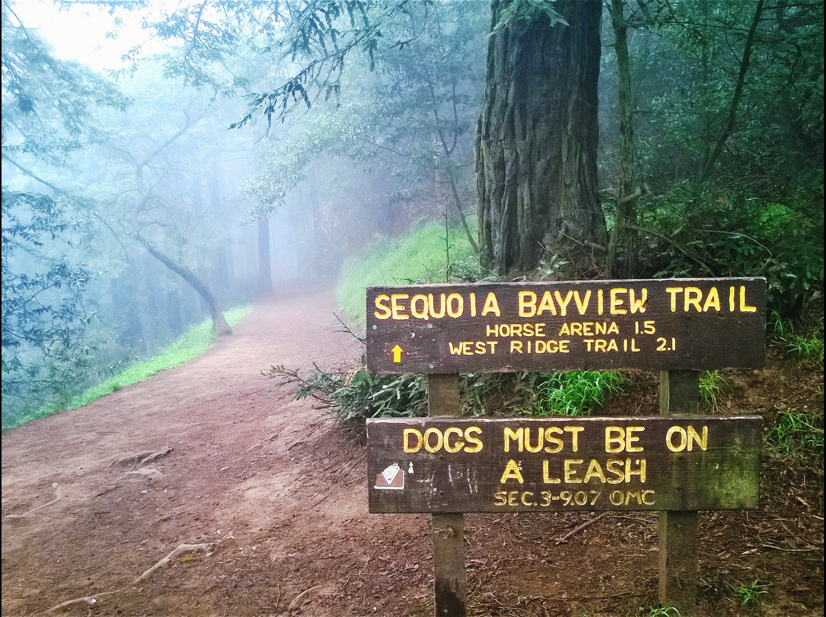 Sequoia-Bayview Trailhead - JMP